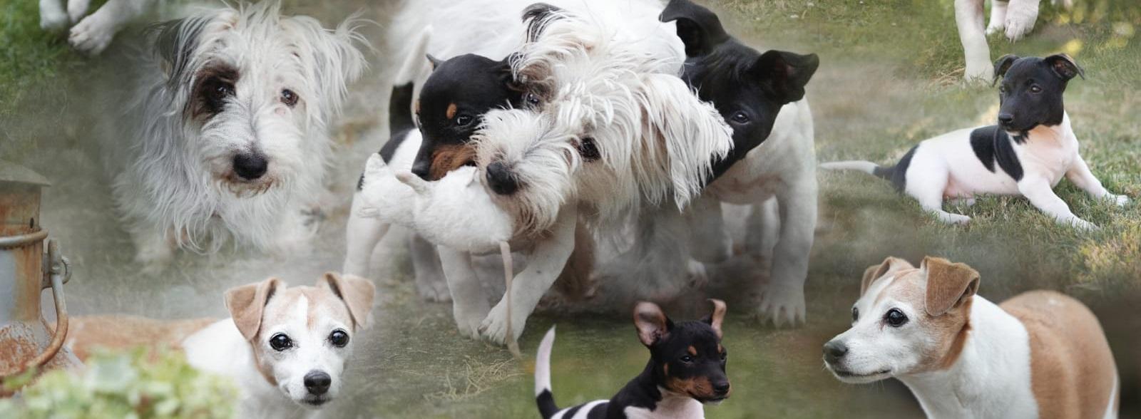 Alles für den Hund